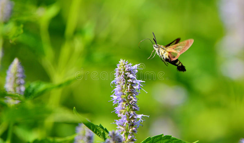 Download Peak moth stock image. Image of material, background - 26204725