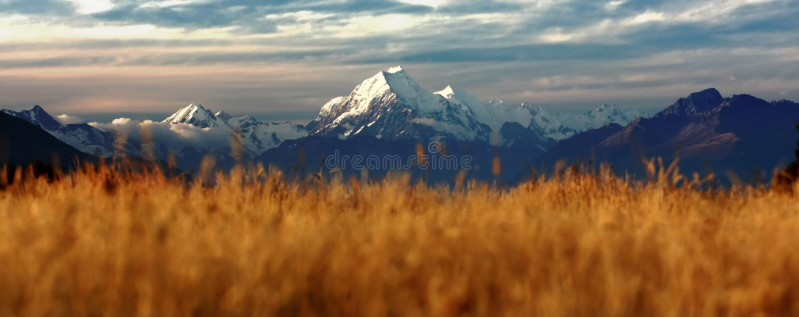 Download The Peak of Mount Cook stock photo. Image of grassy, landscape - 24868452