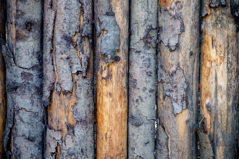 Pealings houten textuur royalty-vrije stock foto