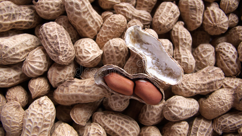 Peanut stock photography