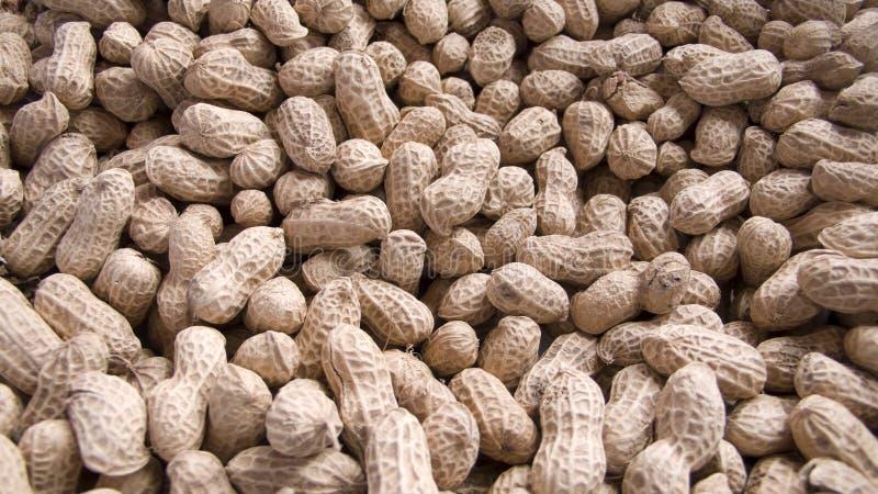 Download Peanut Royalty Free Stock Image - Image: 5954946