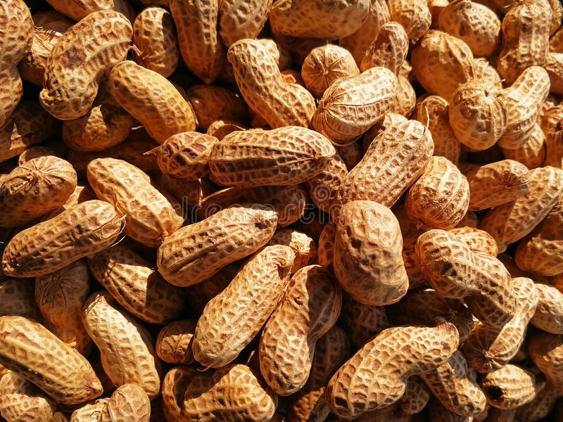 Closeup to Peanuts in sunshine royalty free stock images