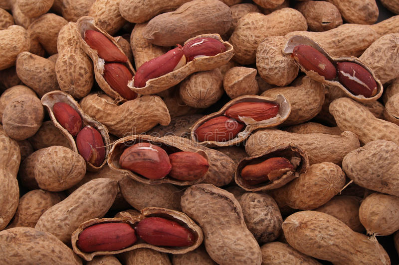 Peanut or groundnut. In it's shell ready to eat royalty free stock photos