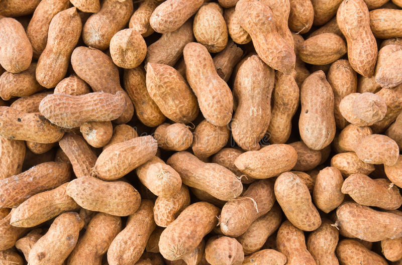 Peanut or groundnut. Close up of some peanuts or groundnut background royalty free stock photo