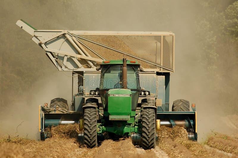 Peanut Harvest Stock Photography