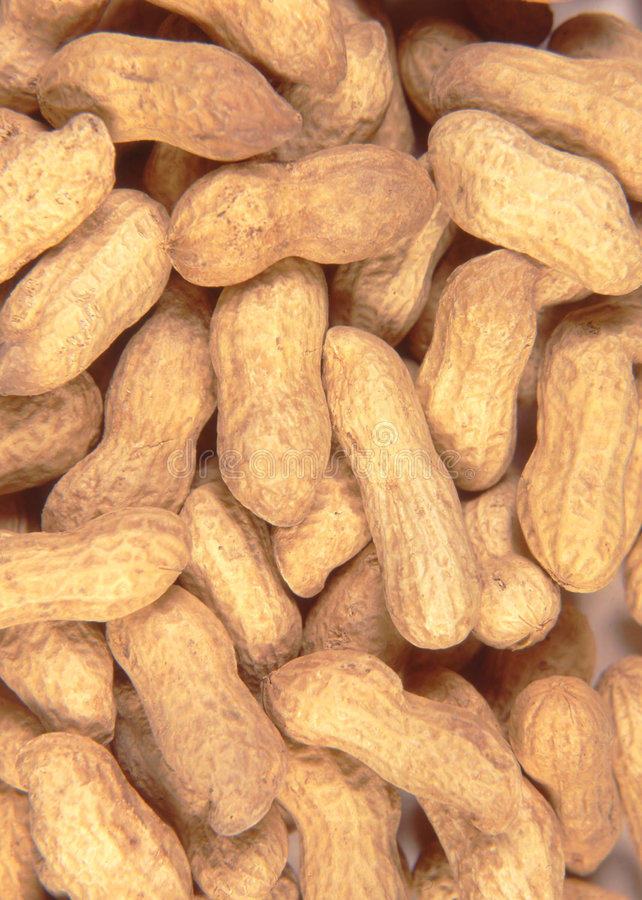 Peanut Naboje Zdjęcie Royalty Free