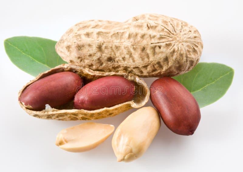 Peanut with pods stock photo