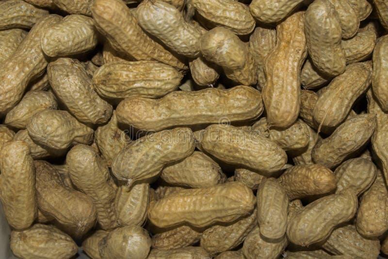 Peanut's royalty free stock photography