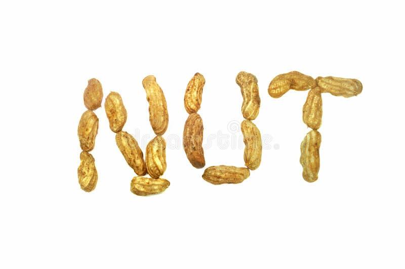 Peanut word on white background royalty free stock image