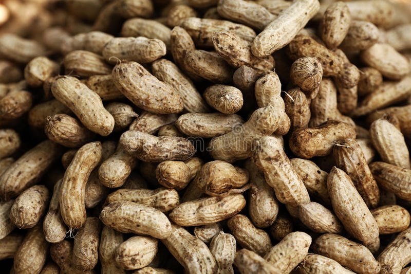Download Peanuts stock image. Image of nutshell, groundnut, nutritious - 12585743