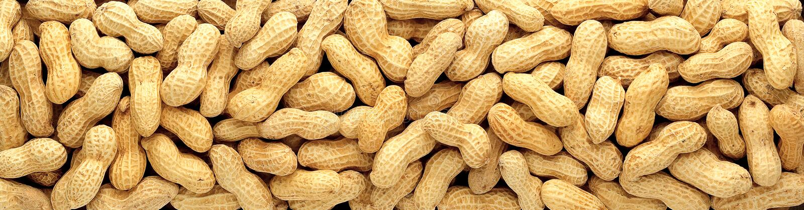 Peanuts. Group of peanuts ready for grab