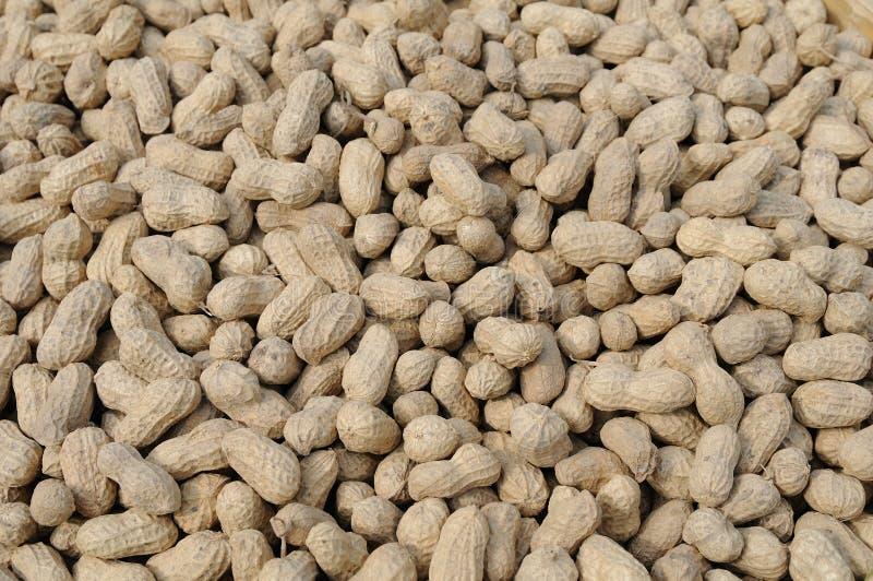 Download Peanuts background stock image. Image of closeup, peanut - 25736239