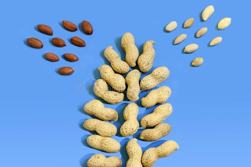 Peanuts nuts in the shape of a tree on a light blue background. Top view. Minimal background texture of food nut stock image
