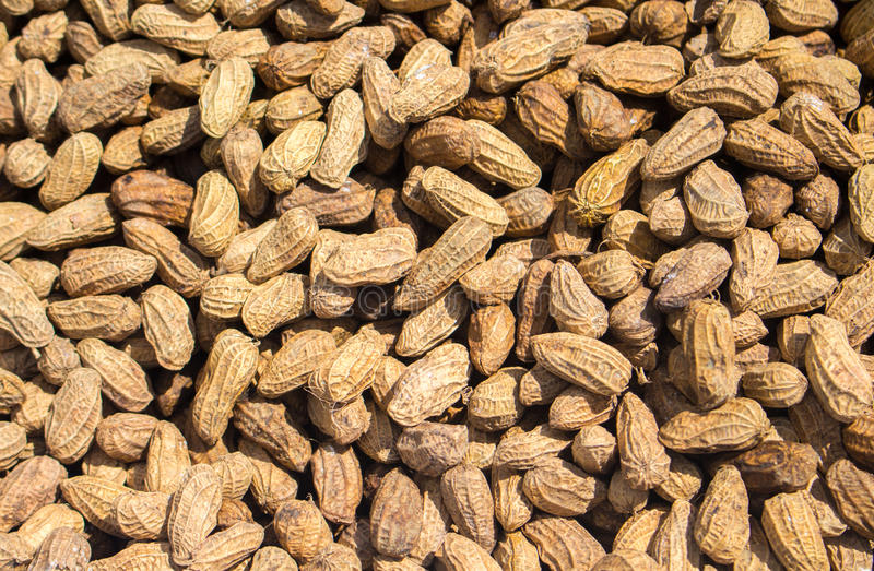 Download Peanuts Pile Under Sunlight Rustic Nut Photo For Wallpaper Or Background Stock