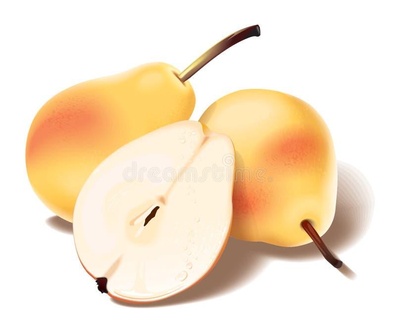 Download Pear stock vector. Illustration of pulp, plants, illustration - 6657336