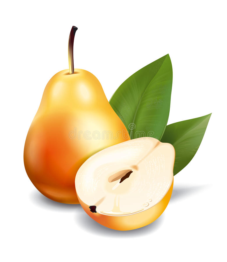 Pear vektor illustrationer