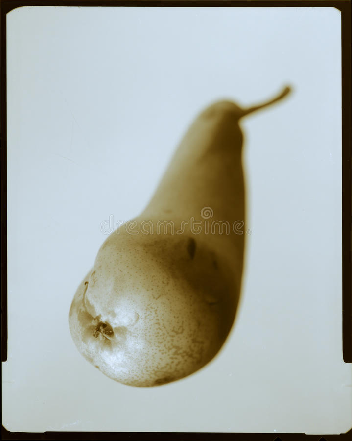 Pear fruit free cutout. Brown pear with black edge as a slide exempt royalty free stock images