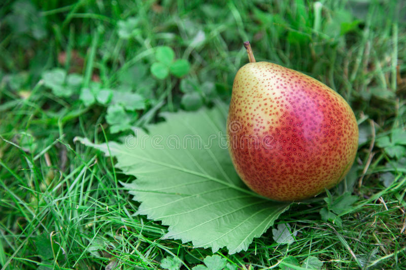 Download Pear On Green Leaf Royalty Free Stock Image - Image: 31957936