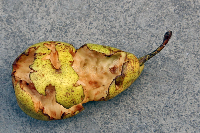Pear half eaten. By blackbirds and magpies royalty free stock photography