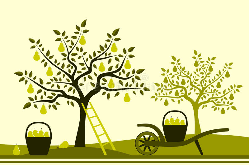 Pear harvest stock illustration