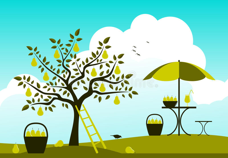 Pear harvest vector illustration