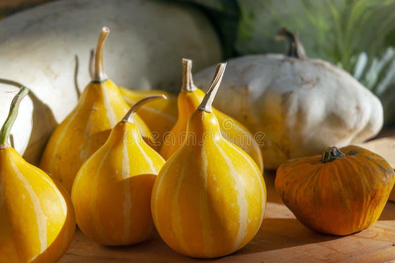 Pear-shaped διακοσμητικός κολοκύθας Ζωή φθινοπώρου ακόμα στοκ φωτογραφία