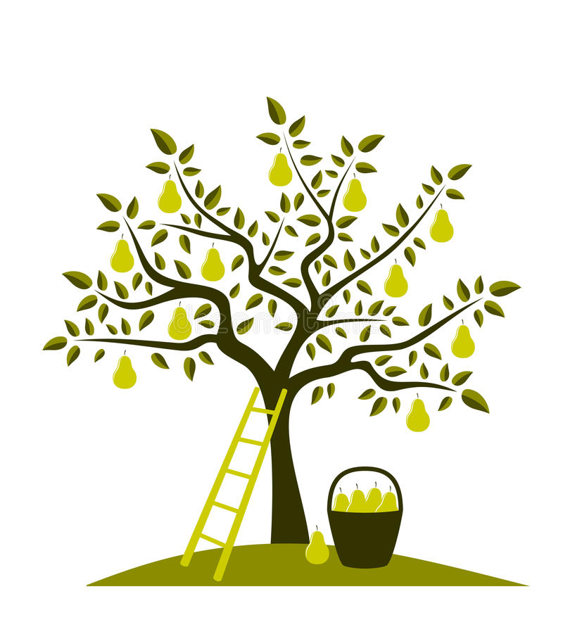 Pear tree stock illustration