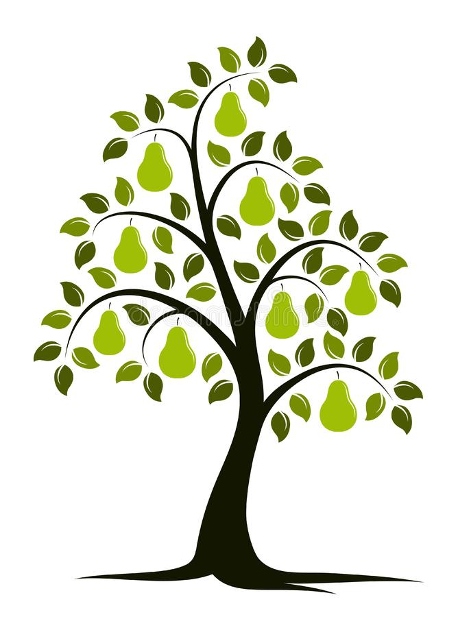 Pear tree vector illustration