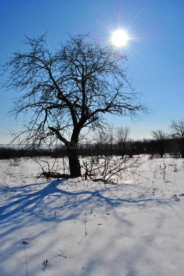 Pear tree without leaves silhouette with long shadows on winter landscape background, blue sky with sun stock images