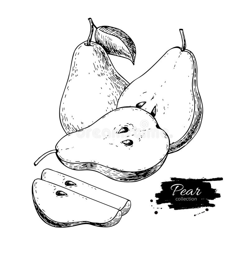 Free Pear Vector Drawing. Isolated Hand Drawn Pear And Sliced Pieces. Royalty Free Stock Photography - 91852307