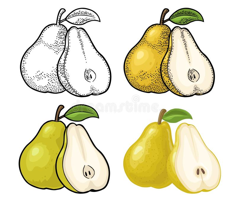 Pear whole and half with leaf. Vintage color engraving royalty free illustration