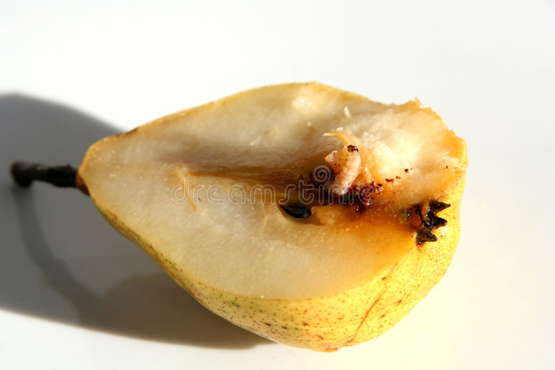 Pear with worm royalty free stock photography