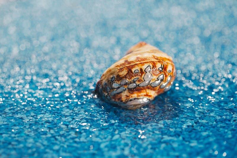 pearl экзотическая раковина моря на голубом камешке под водой стоковые фото