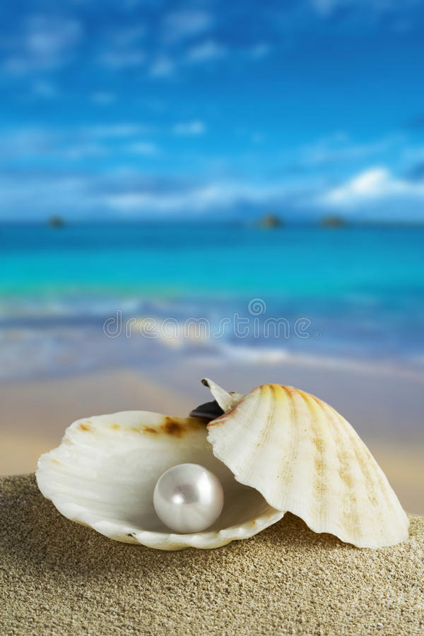Download Pearl stock photo. Image of seashell, blue, ridge, sand - 9605332