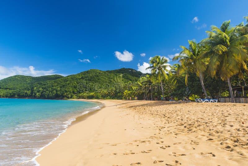 Pearl Beach i Guadeloupe royaltyfria foton