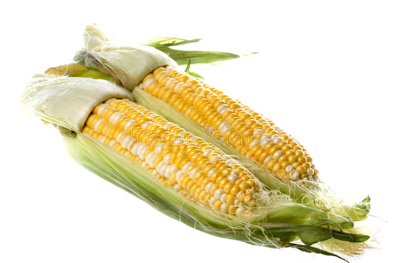 Pearl Corn Isolated. Isolated image of pearl corn against a completely white backgriound stock images
