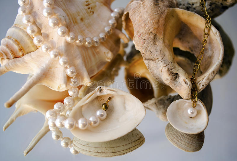 Download Pearl necklace over shells stock photo. Image of empty - 42979076