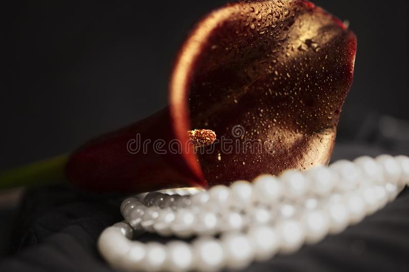 Pearl necklace and red calla flower stock photos