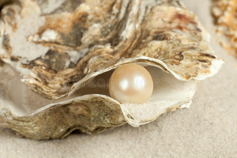 Pearl in oyster stock photography