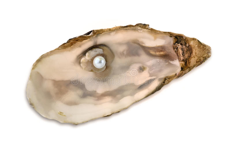 Download Pearl oyster stock image. Image of beautiful, precious - 16459273