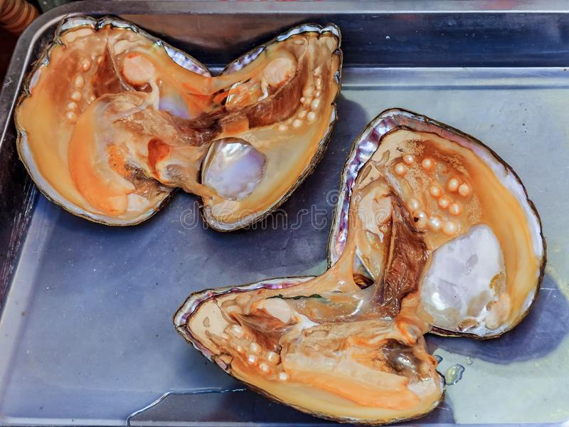 Pearl oyster shell with pearls inside in Xiamen China royalty free stock photography