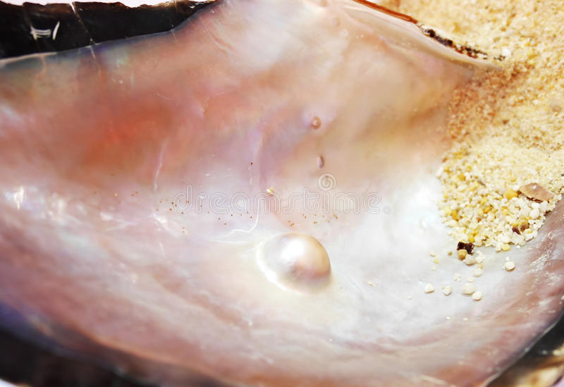 Pearl in an oyster shell royalty free stock photos