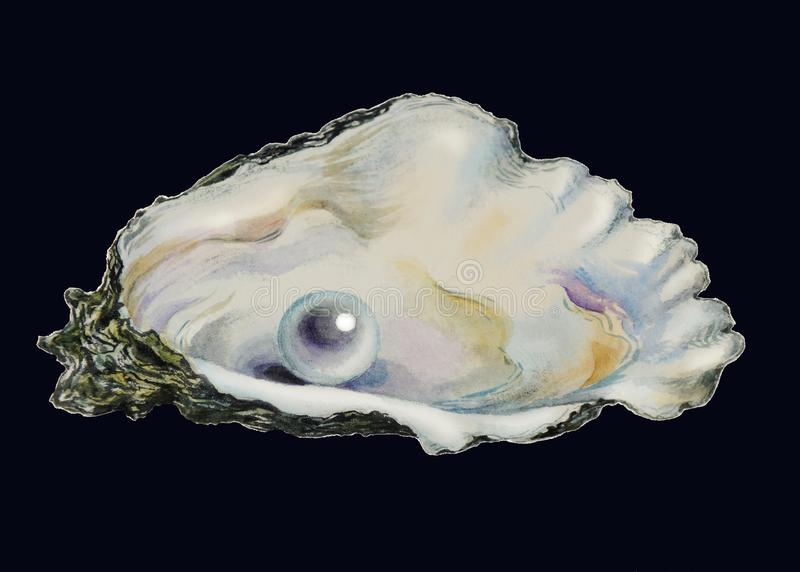 Pearl in pearl shell stock illustration. Illustration of ...