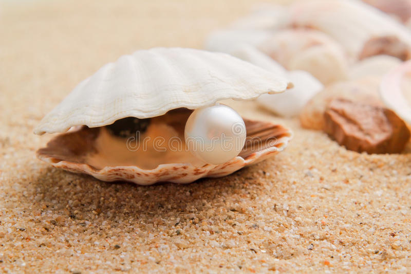 Download Pearl on the seashell stock photo. Image of blue, animals - 19545964