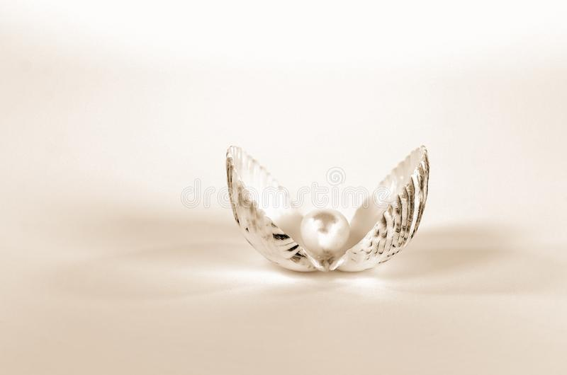 Pearl in seashell with soft lighting. Closeup of pearl in seashell with soft sepia abstract lighting royalty free stock photos