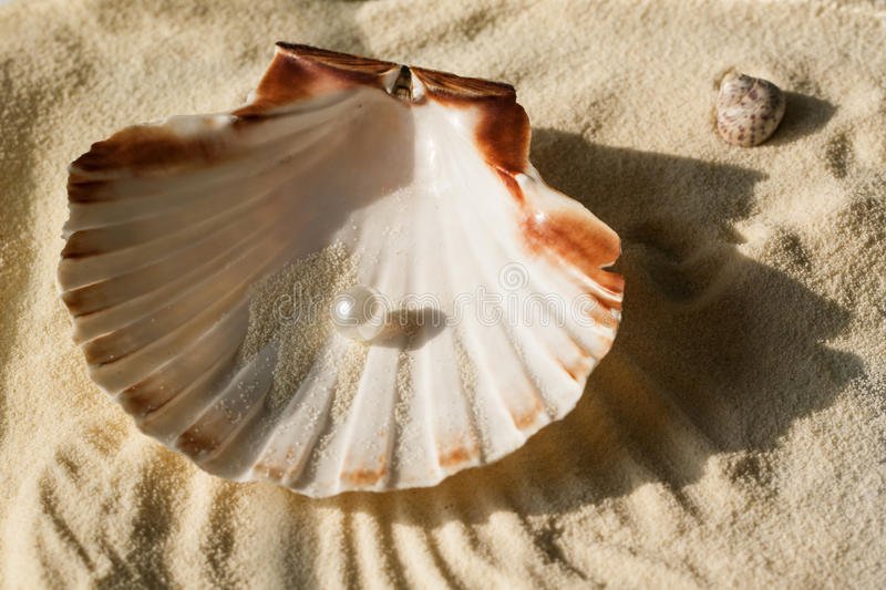 Pearl in the seashell. Top view on white pearl in the beautiful seashell on sand royalty free stock photography
