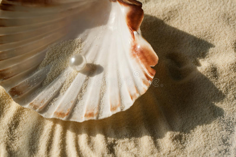 Pearl in the seashell. White pearl in the beautiful seashell on sand stock image