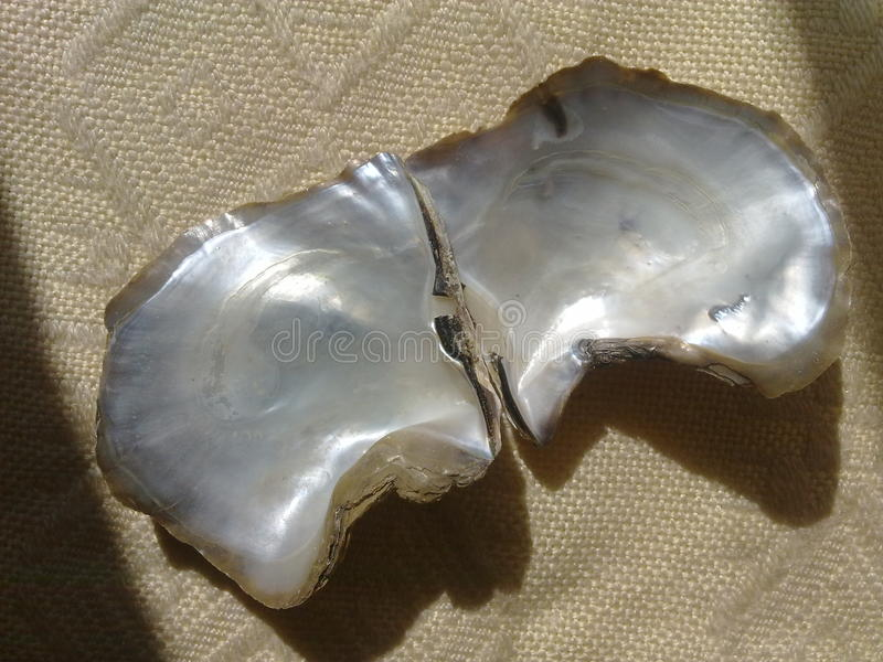 Pearl Shell. Open view of a pearly shell stock photo
