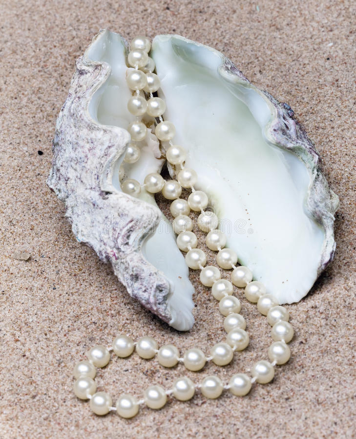 Pearl and shell.Still-life. In a sunny day royalty free stock images