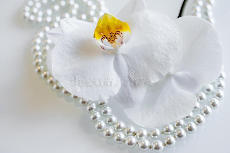 Pearl and white orchid. On a white glas royalty free stock photography